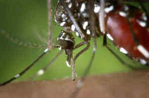 Infezione da Virus Zika
