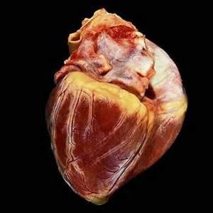 Come sarà il tuo cuore a 100 anni?